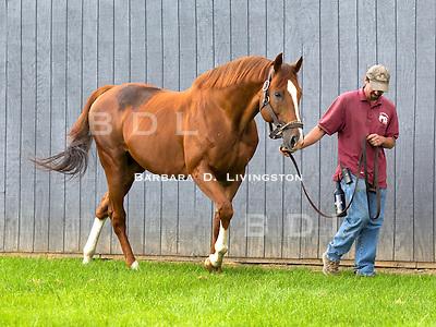 Simmard (stallion) at Mill Creek Farm, Stillwater, NY