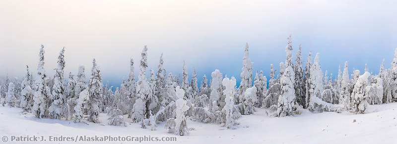Heavy wind blown snow coats spruce trees in Alaska's interior.