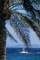 Europe/Provence-Alpes-Côte d'Azur/83/Var/Le Lavandou: Palmiers et bateau de pêche