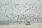 Africa, Mauritania, Sahara Desert, nr. Nouakchott. Land Rover Defender 110 encircled by thousends of birds on the beach of the nature reserve Parc National du Banc D'Arguin in Mauritania. --- RELEASES AVAILABLE! Automotive trademarks are the property of the trademark holder, authorization may be needed for some uses.
