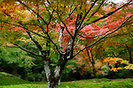 Colorful Japanese maple tree in a beautiful mossy autumn nature scenery in a garden at Tofuku-ji, Kyoto, Japan