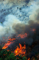 Aerial of rainforest being burned to clear land for cattle ranching, Brazil, Para, Amazon region..