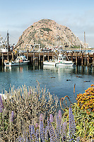 Sea otters rest near the dock by Morro Rock. Morro Bay, California.