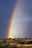 Rainbow over Kalahari landscape