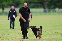 Pictured: PC Marc Porter and PD Taylor take part in a practise round during the 59th National Police Dog Trials at Tredegar House, near Newport, Wales, UK. Friday 17 May 2019<br /> Re: 59th National Police Dog Trials where teams from Police Forces from around the UK compete to be crowned the national winner at Tredegar House, near Newport, Wales, UK.