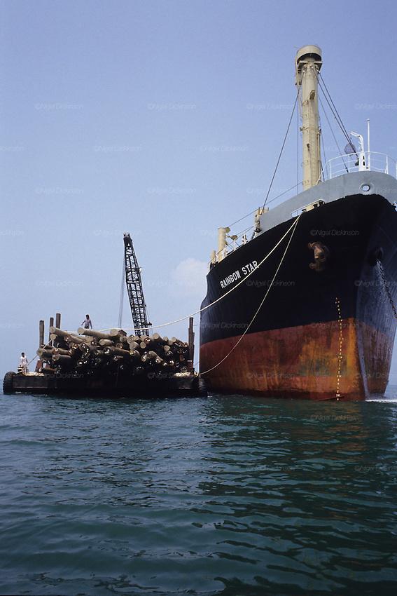 Logging cargo ship, destruction of habitat, tropical