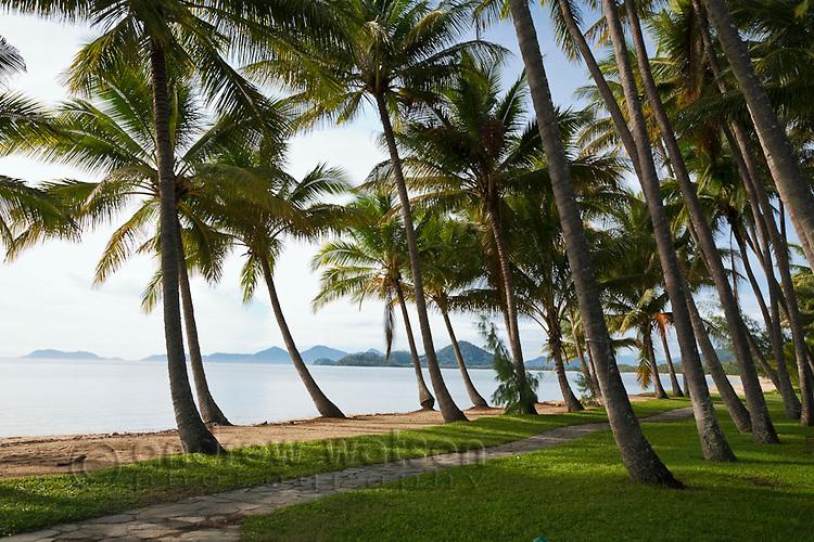 Coconut palms line the beachfront at Palm Cove, Cairns, Queensland, Australia