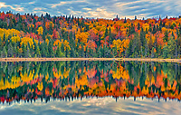 Autumn  colors reflected in  Lac Modène. Great Lakes - St.  Lawrence Forest Region.<br />