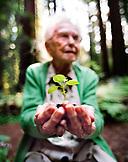 USA, California, Eureka, senior woman holding seedling in redwood forest