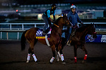 October 30, 2019: Breeders' Cup Filly & Mare Sprint entrant Secret Spice, trained by Richard Baltas, exercises in preparation for the Breeders' Cup World Championships at Santa Anita Park in Arcadia, California on October 30, 2019. Michael McInally/Eclipse Sportswire/Breeders' Cup/CSM