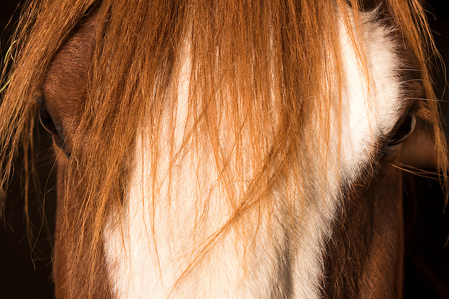 horse bangs at stables at Northeastern Junior College, spring morning in Sterling, Colorado, USA