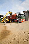 Loading onions onto lorry trailer for transport, Shottisham, Suffolk, England