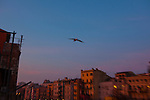 Seagull over the River Onyar at dawn, Girona.