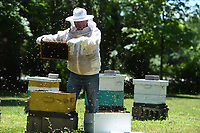 Beekeeper Ray Kelley of Elkins pulls a frame laden with honey while checking his hives Wednesday May 20, 2020 at the Reagan Family Farm in Fayetteville. Kelley keeps around 70 hives scattered around rural areas. He started keeping bees around 7 years ago as a hobby before making it a business. Ray's Raw Honey is available at small independent business in the Northwest Arkansas area and can be found on Facebook. Visit nwaonline.com/2005210Daily/ for photo galleries. (NWA Democrat-Gazette/J.T. Wampler)