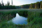 Idaho, Priest Lake, Nordman. Early morning on Reeder Creek. Reeder Creek flows east through a marshy area in Bismark Meadows before joining Priest Lake,