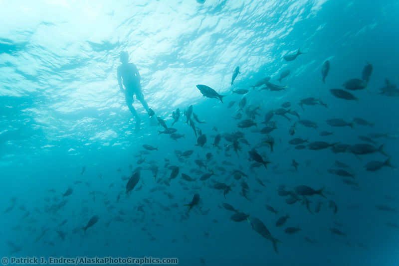 Snorkeling at the Devil's Crown, Galapagos Islands