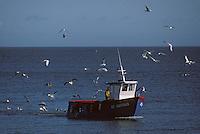 Europe/France/Bretagne/56/Morbihan/Belle-île/Sauzon: Retour de pêche