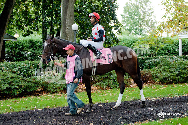 Onepointhreecarats before The Justakiss Stakes at Delaware Park on 10/5/13