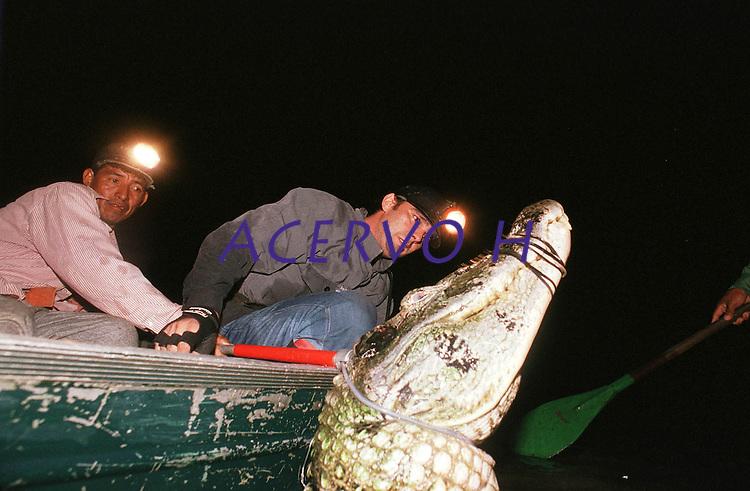 O pesquisador Ronis da Silveira captura mais um jacaré açú com cabo de aço. Dados levantados em suas pesquisa, que o fizeram capturar mais de 3.000 jacarés, indicam a possibilidade de manejo com exploração da espécie em 15 dos 620 lagos existentes na ·rea focal do projeto Mamirau·(RDS Reserva de Desenvolvimento Sustent·vel).<br /> Mamirauá, Tefé, Amazonas, Brasil.<br /> Foto Paulo Santos<br /> 7/12/2000