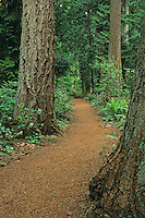 Section of trail winds through forest in the south loop of Weowna Park, Bellevue, Washington.