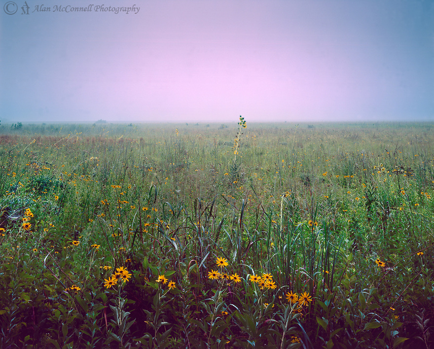 A morning fog over Fisher Oak Savanna Nature Preserve creates a sublime scene.  Aimed at the rising sun, the fog diffuses the light into a warm halo over the diverse prairie plants.  The restoration of the 220 acres, now under the care of NICHES Land Trust, stands as an example of how a high quality prairie can be ecologically beneficial to us all.