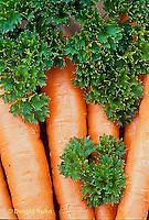 HS35-026x  Parsley - Forest Green variety - Petroselinum crispum