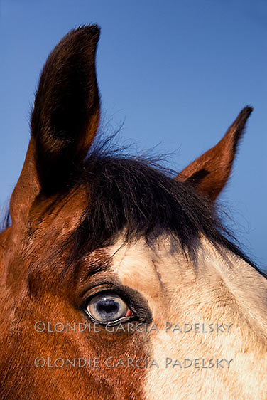 Close up photo of a horses head