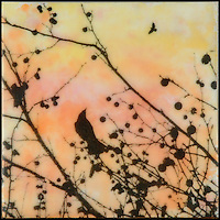 Encaustic painting with photography of bird in branch with berries and bird in sunset orange and yellow sky
