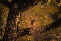 Mockingbirds, Catbirds and Thrashers