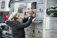 Jerry Sousa's wife Kathleen Holden coaxes a dog from its box prior to the ceremonial start of the Iditarod sled dog race in downtown Anchorage Saturday, March 2, 2013. ..Photo (C) Jeff Schultz/IditarodPhotos.com  Do not reproduce without permission