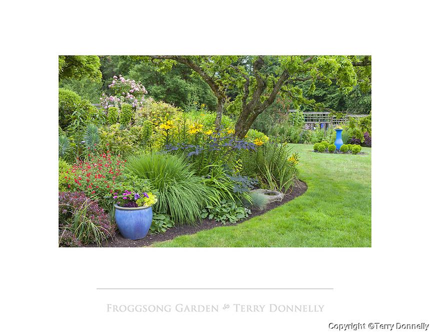 Vashon Island, WA: Summer perennial garden featuring salvia, euphorbia, grasses, actea, and Asian lilies; Froggsong garden in summer