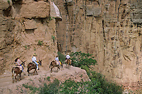 Mule riders on Bright Angel Trail, below South Rim of Grand Canyon, Grand Canyon National Park, Arizona, AGPix_0271.