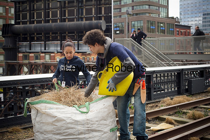 High school teenagers, participants in the Friends of the High Line's High Line Green Corps, garden in the elevated park on Wednesday, March 27, 2013.  The Green Corps is part of a school jobs program, which enables the teenagers to work with the High Line's horticulture staff.  © Frances M. Roberts)