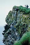 The Pribolof Islands (off the coast of Alaska)
