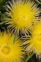 Spiky yellow flowers kissed by the sun