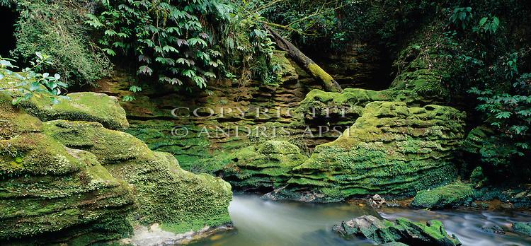 Native forest in the Waitomo area. Waikato Region. New Zealand.