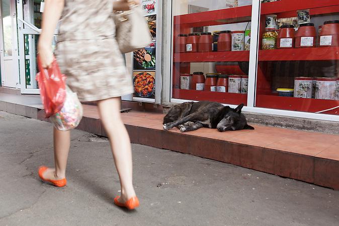 Herrenlose Hunde sind in den Straßen von Bukarest ein großes Problem. / In the streets of Bucharest homeless dogs are a big problem.