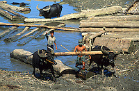 Asie/Birmanie/Myanmar/Haute Birmanie/Mandalay : Buffalo-working sortant du bois de l'eau sur le port