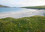 Machair grassland and sandy beach at Bagh a Deas, South Bay, Vatersay island,Barra, Outer Hebrides, Scotland, UK