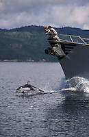 ly67. Pacific White-sided Dolphin (Lagenorhynchus obliquidens) leaping in front of boat with women watching. British Columbia, Canada, Pacific Ocean..Photo Copyright © Brandon Cole.  All rights reserved worldwide.  www.brandoncole.com..This photo is NOT free. It is NOT in the public domain...Rights to reproduction of photograph granted only upon payment of invoice in full.  Any use whatsoever prior to such payment will be considered an infringement of copyright...Brandon Cole.Marine Photography.http://www.brandoncole.com.email: brandoncole@msn.com.4917 N. Boeing Rd..Spokane Valley, WA 99206   USA..tel: 509-535-3489