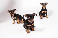Mutt Pups 11-17-15