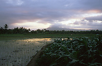 Paddy fields in Java, Indonesia.<br /> Risaie a Giava, Indonesia