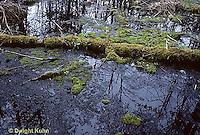 BS01-002a  Woodland bog