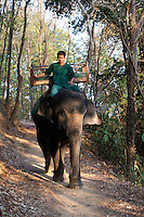 January 17th, 2009_SIEM REAP, CAMBODIA_ Elephants are used to ferry tourists up a hill to the Bakheng Temple, which is a part of Cambodia's Anchor Wat Temple complex and was constructed more than two centuries before Angkor Wat.  Anchor Wat is a vast complex of temples and other significant structures and is a UNESCO World Heritage site.  Photographer: Daniel J. Groshong/Tayo Photo Group