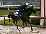 November 01, 2018 : The Black Album in preparation for the Breeders' Cup on November 01, 2018 in Louisville, KY.  Candice Chavez/ESW/CSM