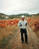 USA, California, A man holds grapes during harvest at the Sabon Estate Winery, Plymouth, Gold Country