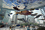 July 18, 2012, Tokyo, Japan - Tropical fish swim leisurely before envious gazes of pedestrians in the Sony Aquarium set up temporarily at a corner of the Sony Building in Tokyos Ginza shopping district on Wednesday, July 18, 2012. The huge glass tank with some 500 fish from Okinawa, southern Japan, has long become the areas summer fixture with the oncoming of sweltering summer. (Photo by Natsuki Sakai/AFLO)