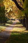The maple lined streets provide fall color in a Missoula, Montana neighborhood