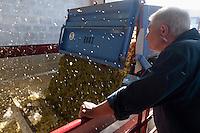 Europe/France/Poitou-Charentes/17/Charente-Maritime/Ile de Ré/Le Bois-Plage-en-Ré: Mr Guilbaud oenologue surveille l'arrivée de la vendange à la  Coopérative  des Vignerons de l'Ile de Ré - UNIRE