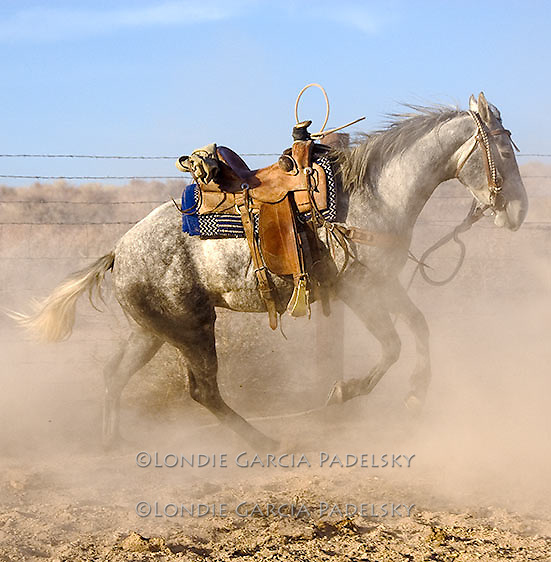 Horse Bucking, Owens Valley, California